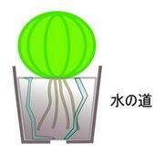 水やり4.jpg
